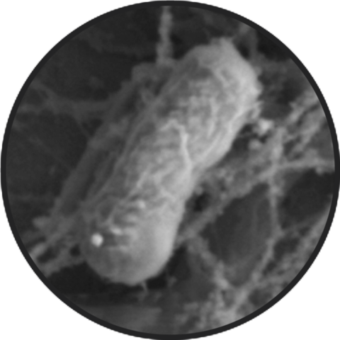 Medium e coli healty in circle