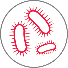 Bacteria red icon