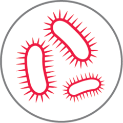 Small small bacteria icon red